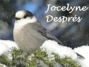 1-Janvier_Mesangeai du Canada-Jocelyne Despres_Petite_Nom