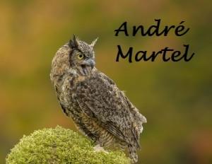 3-Grand-duc dAmerique_Andre Martel_Petite_Nom