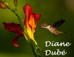 6-colibris gorge rubis_Diane Dube_Petite_Nom