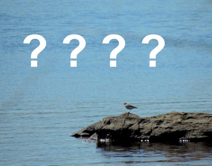 Observation des oiseaux : Par où commencer?