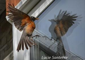 Des fenêtres dangereuses - Go oiseaux!