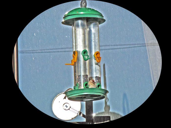 Voyeur ou ornithologue?