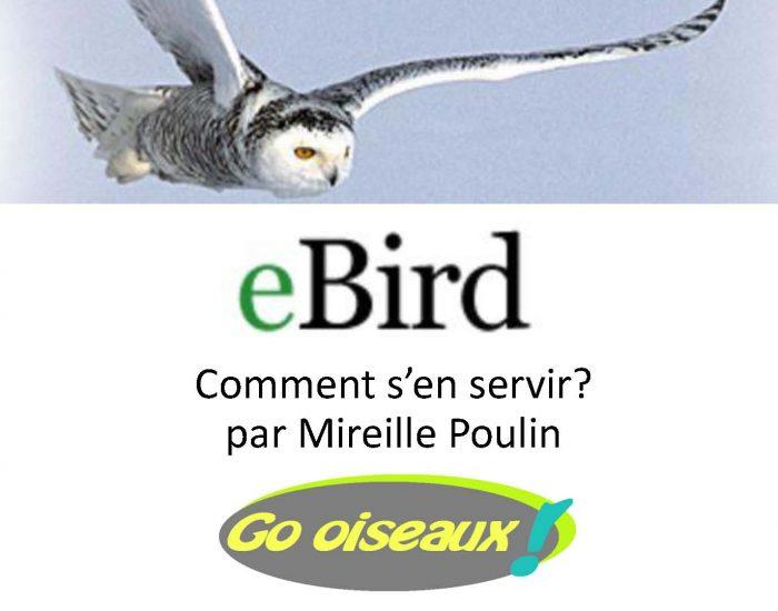 Comment entrer et voir des observations d'oiseaux sur eBird?