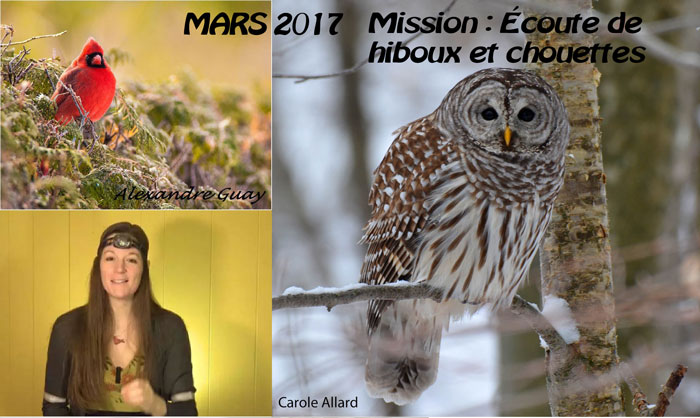 mission de mars 2017 couter un hibou ou une chouette go oiseaux. Black Bedroom Furniture Sets. Home Design Ideas