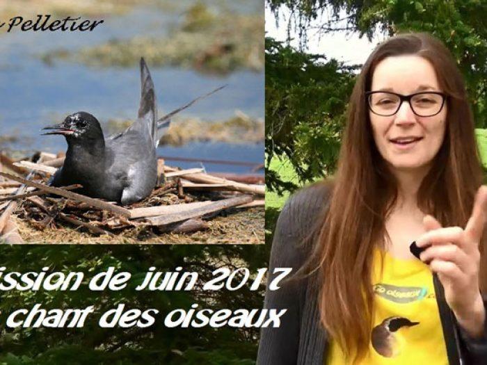 Mission de juin 2017 : Reconnaître des chants d'oiseaux