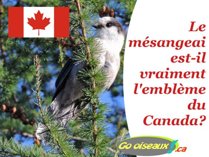 Le Mésangeai du Canada est-il l'emblème aviaire du Canada?