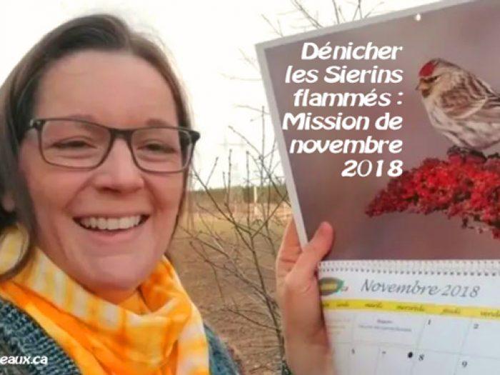 Observer le Sizerin flammé : Mission de novembre 2018