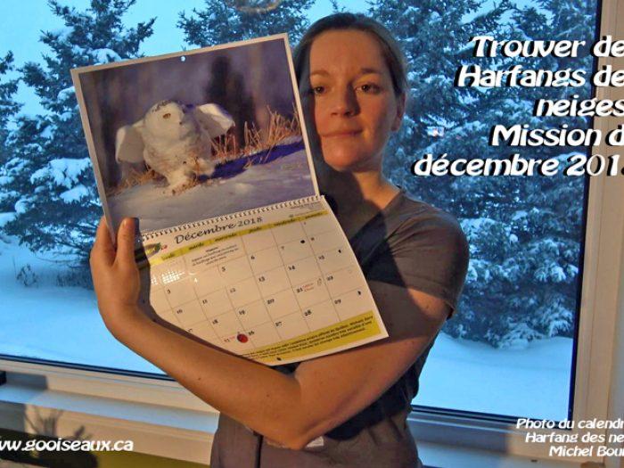 Trouver des Harfangs des neiges : Mission de décembre 2018