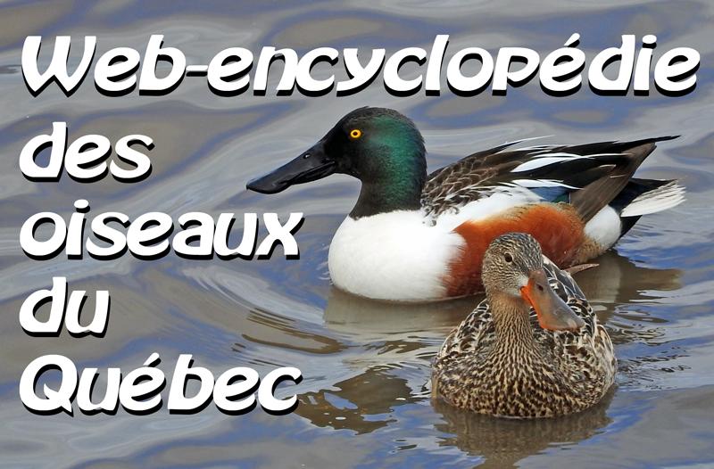 Couple de Canards souchets et texte indiquant Web-encyclopédie des oiseaux du Québec