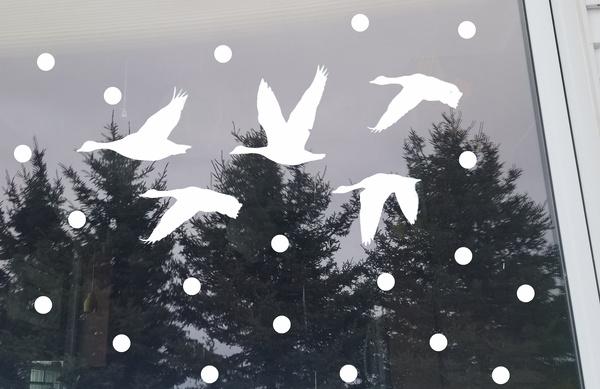 5 silhouettes de bernaches et des points blancs dans une fenêtre